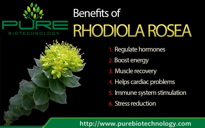 100% Pure Natural Rhodiola Root Extract (3)