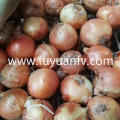 Groothandel New Crop Yellow Onion