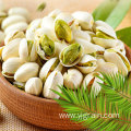 Wholesale Agriculture Products High Quality Pistachio Nuts