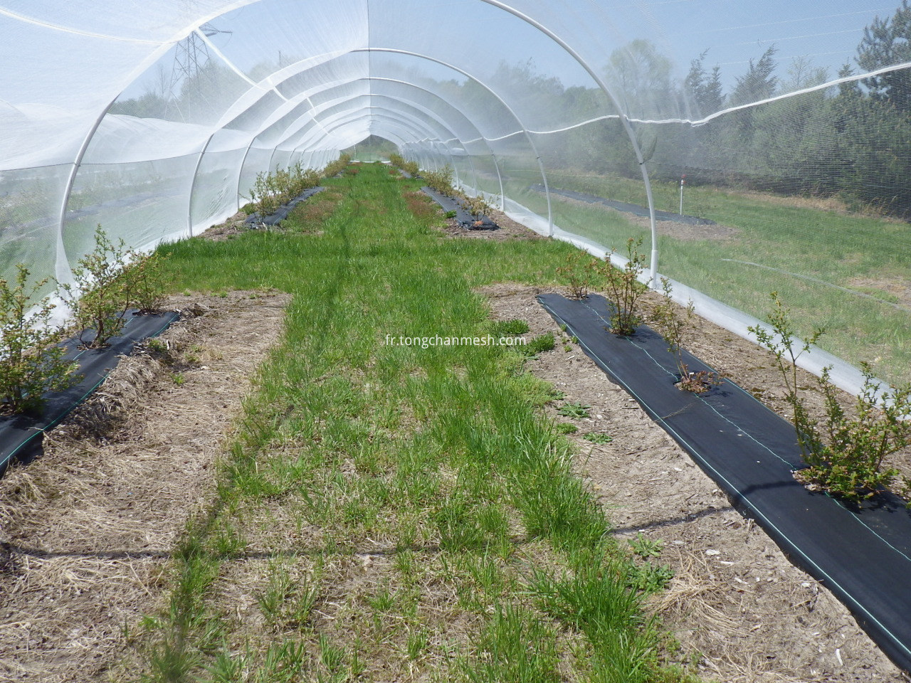 agricultural anti insect net
