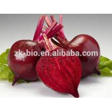 Polvo orgánico de raíz de remolacha roja