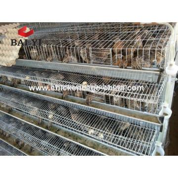 Cages grillagées Cage Cage cages batterie cages