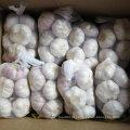 Fornecedor experiente de alho branco fresco da China