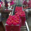 frische Shandong Yantai Papiertüte Fuji Äpfel