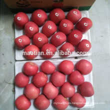 Fruta roja fresca de manzana Fuji