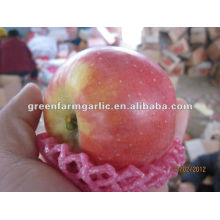 Großhandel Markt Bio-Obst besten Preis Fuji Apfel