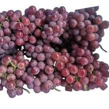 fresh new crop chinese red globe grape Excellent quality delicious grape red with competitive price