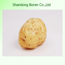 Chinese Fresh Potato in Good Quality