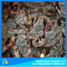 Crabe de boue congelé bon marché avec qualité supérieure