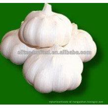 2014 chinese garlic