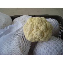 Nova colheita de boa qualidade de couve-flor para exportação