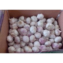 Empaque de ajo en una caja natural