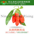 la baie de goji wolfberry hot in saling