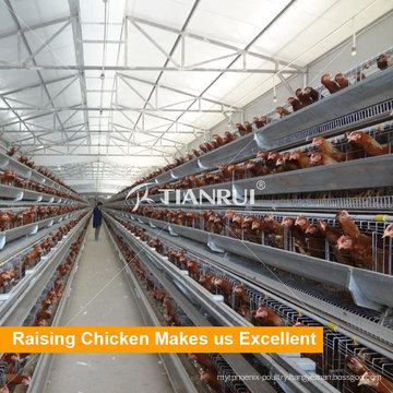 New design and low price poultry chicken cages