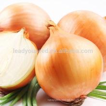 AON012 Huangguo f1 semillas de cebolla amarilla híbrida precio