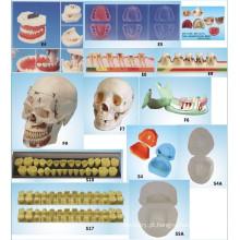 Equipamento de Educação de Ciência Oral Modelo de Dental de Modelo de Drogas Periodontais