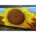 Écran LED couleur 4K HD LED Display