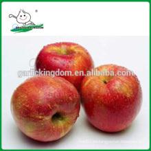 Manzanas de Qinguan / manzanas frescas de Qinguan / manzanas deliciosas de Qinguan