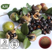 Natrual Camellia Oleifera Extrato de Sementes Saponinas de Chá 90% para Skincare