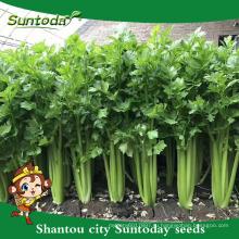 Suntoday растительное Ф1 растет китайская капуста ассорти из свежих Европе сельдерей высокой раза овощных гибридных семян для семян продажа(A4300)