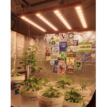Hosehold Small Dimming 240w LED Grow Lights