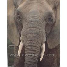 Ölgemälde Leinwand von Elefanten