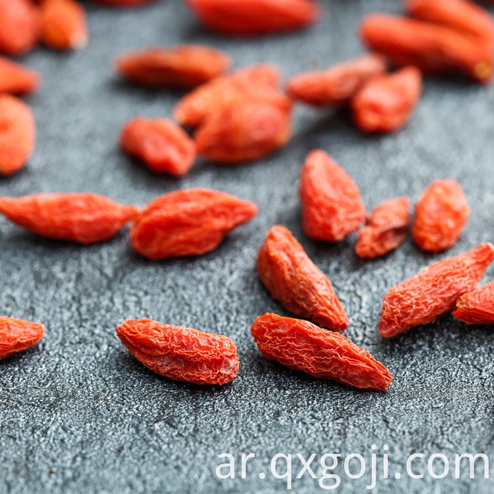 Red Goji Berries Wolfberries Fruit