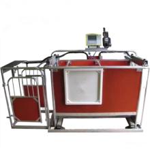Sheep Equipment Automatique 3-way Mouton Chèvre Projet d'usine Prix