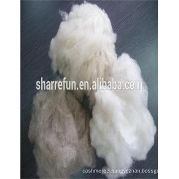 Sharrefun whosale 100% dehaired cashmere fibre for yarn spinning