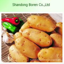 Chinese Fresh Potato in Hot Sale 2015