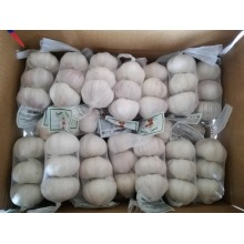 New Crop Fresh Garlic Mesh Bag Packing