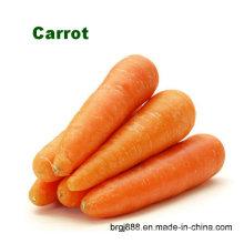 Zanahorias Frescas Frescas Frescas