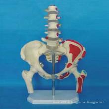 Menschliches Anatomie-beschriftetes Skelettmodell für die Lehre (R020802)