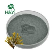 Sea moss capsules sea moss bladderwrack burdock Powder