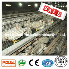 Meat Chicken Cage System