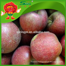 round apple Fuji type honey apple on sale