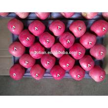 Frische rote Fuji Äpfel