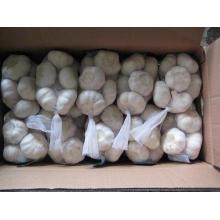 Exportar nuevo ajo blanco normal fresco de cultivo (4.5 / 5.0)
