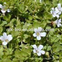 Mejor precio polvo de extracto de boswellia serrata