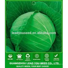 NC40 Шуру лучшие семена капусты для открытого грунта, семена заводчика