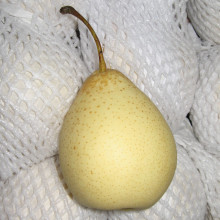 Delicioso, doce, suculenta Ya Ya Pear