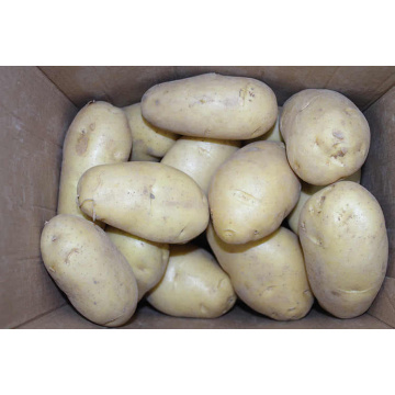 Super Quality 2020 New Crop Frische Kartoffel