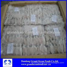 BQF Baby squid in wholesale
