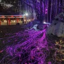 Twinkle Fiber Optic Lights with Led illuminator