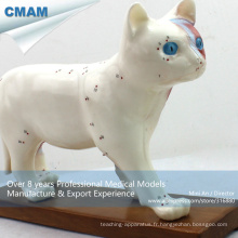 A04 (12004) Éducation Médicale en plastique Anatomie Chat Acupuncture Animal Modèle 12004