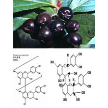 Natural Black Chokeberry Extracto Polvo Anthocyanin 5% -70% 4: 1, 10: 1 CAS: 18466-51-8