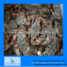 good frozen superior perfect mud crab with fien quality