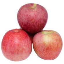 China huaguan apple early apple small apple 138-198