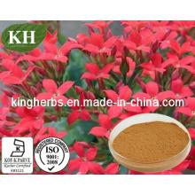 Water Soluble Rhodiola Rosea Extract Salidroside