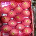 высокое качество рыночная цена Fuji яблоко
